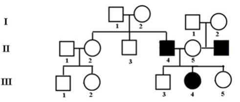 Banco de preguntas de genética